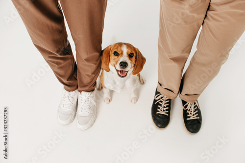 Fotografie, Obraz happy beagle dog sitting close to owners legs, top view