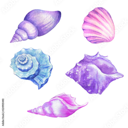 Slika na platnu Watercolor seashells in blue lilac and pink colors