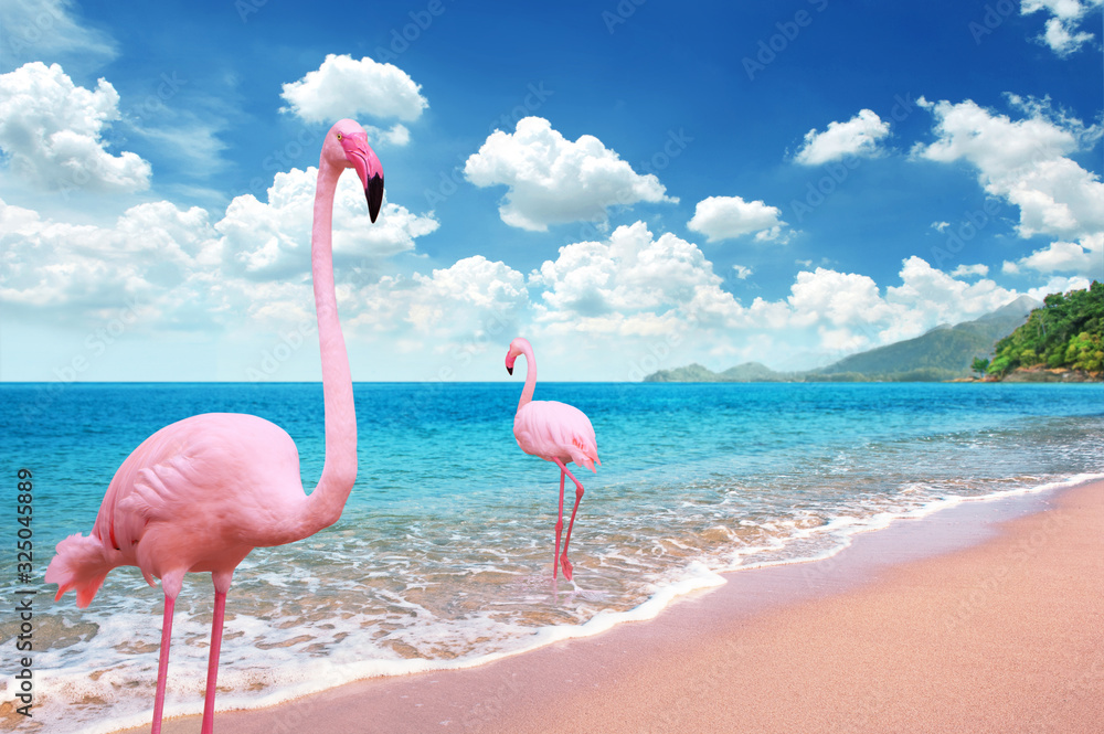 Beautiful Sandy Beach with pink flamingo brids stand in the sea and bright blue sky fully with cloudscape <span>plik: #325045889   autor: ohishiftl</span>