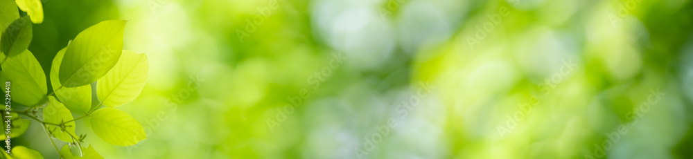 Nature of green leaf in garden at summer. Natural green leaves plants using as spring background cover page greenery environment ecology wallpaper <span>plik: #325294418 | autor: Fahkamram</span>