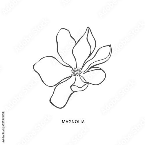 Fototapeta Hand drawn magnolia flower. Botanical design element