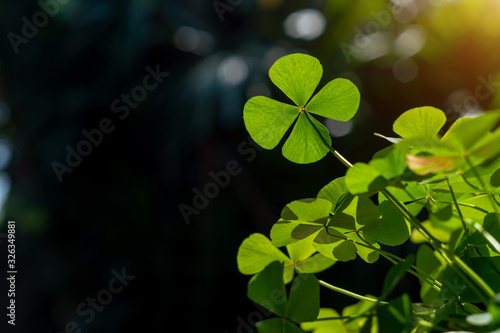 Fotografía clover leaf in lens flare for background and St