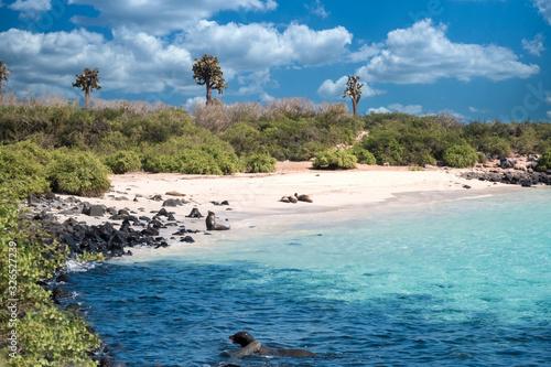 Fototapeta premium Primeval coastal landscapes on Santa Fe Island, with sea lions, marine iguanas and boobies, Galapagos Islands, Ecuador