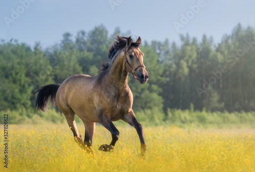 Photo Andalusian horse galloping across blooming meadow.