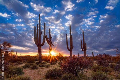 Billede på lærred Saguaro cactus and Arizona desert landscape at sunset