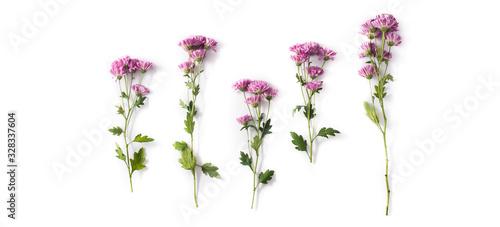 Fotografia, Obraz Violet chrysanthemum flowers bouquet isolated on white background