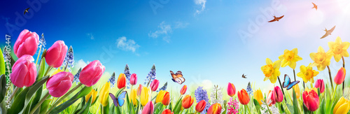 Tulips And Daffodils In Sunny Field - Spring flowers #328405447