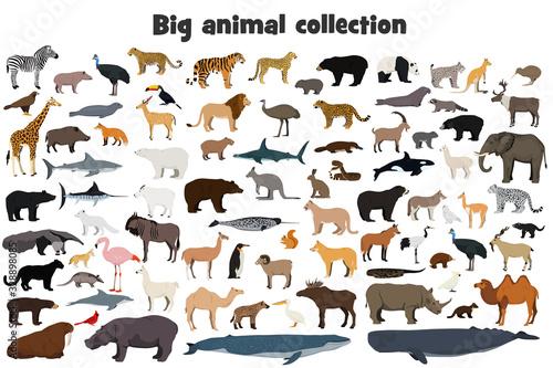 Big animal collection. Set of wild forest, arctic and antarctic, jungle, mountain, african, australian animals, marine mammals, birds, fish. Realistic animals. Stock vector illustration.