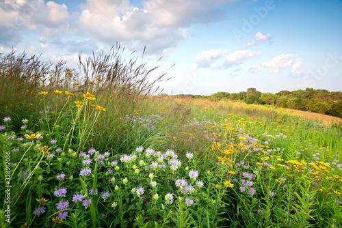 Carta da parati Sunset light on native grasses wildflowers in a Midwest prairie.