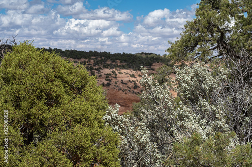 Valokuva green Canyon, Arizona