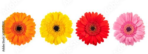 Fotografie, Obraz Gerberas flowers