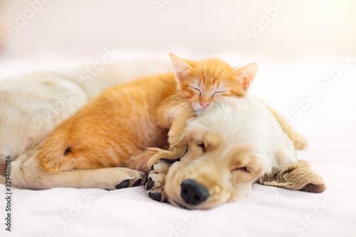 Photo Cat and dog sleeping. Puppy and kitten sleep.