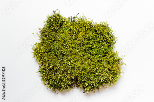 Fotografia Large piece of green natural forest moss on white background.
