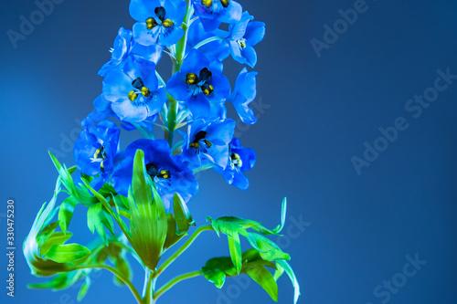 Fotomural Blue delphinium flower close-up