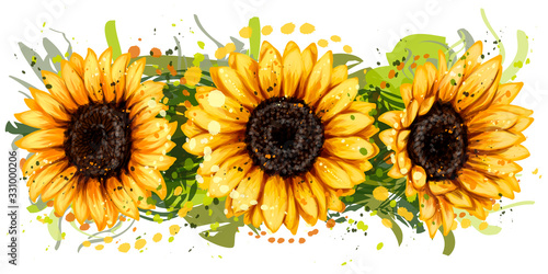 Sunflowers. Artistic, color, drawn image of bright sunflowers in watercolor style on a white background. Wall sticker.