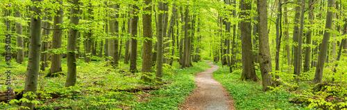 Photo Frühling im Nationalpark Hainich, Wanderweg windet sich durch grünen Wald, Thüri