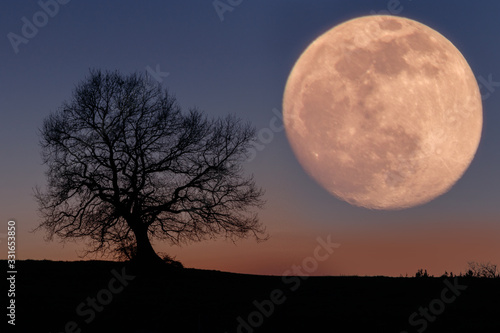 Canvas Print Arbol y luna