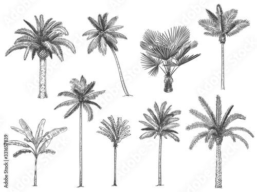 Hand drawn tropical palm trees Fototapeta