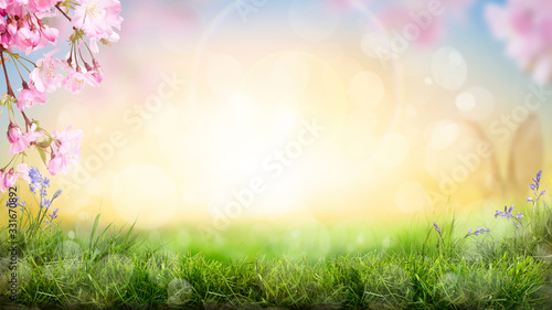 Pink cherry tree blossom flowers blooming in a green grass meadow on a spring Easter sunrise background.