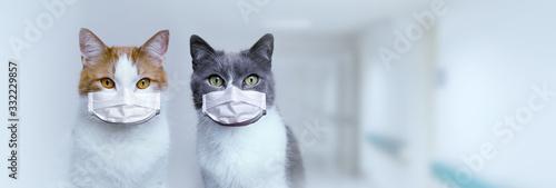 Dwa koty w medycznych maskach ochronnych. Ochrona i leczenie wirusa. Pandemia 2020.