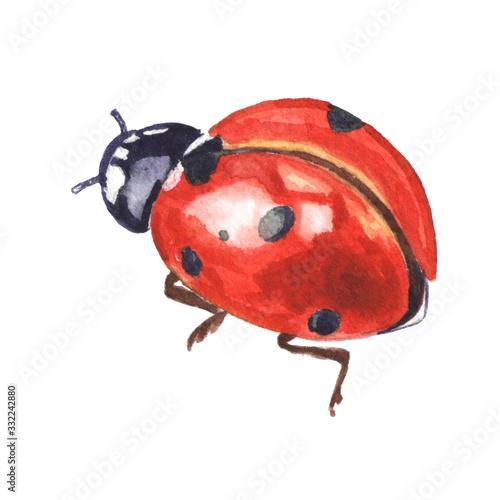 Obraz na płótnie Red spotted ladybug isolated on white background