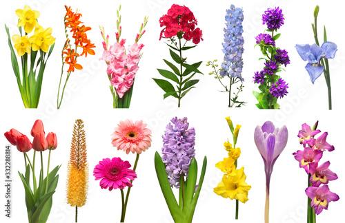 Fotografia Spring collection of flowers crocosmia, iris, eremurus, bell, phlox, tulip, croc