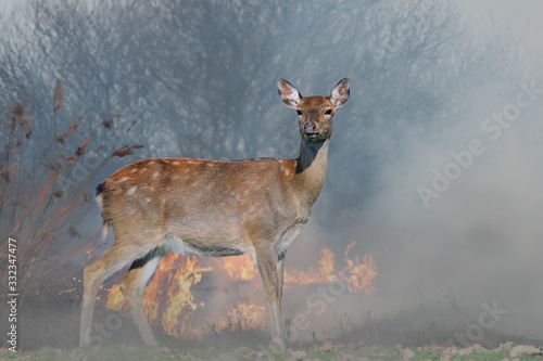 Canvas Print Deer on a background of burning forest