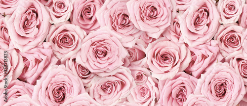 Background image of pink roses. Top view of rose flowers. Studio shot of flowers.