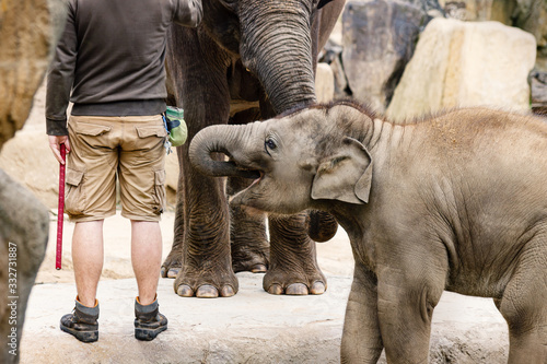 Old and Young Elephants with Animal Keeper in ZOO Fototapete