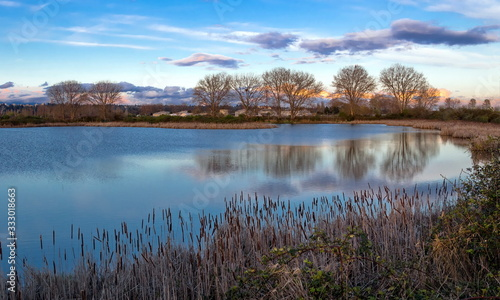 Fotografie, Obraz Spring, a beautiful lake with shores covered with thick reeds and bare trees on the background of a cloudy sunset sky in purple color on the horizon