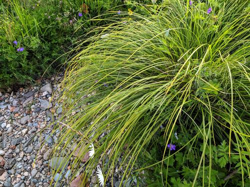 Fotografia Thickets of river grass