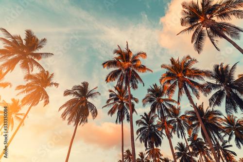 Fényképezés Copy space of tropical palm tree with sun light on sky background