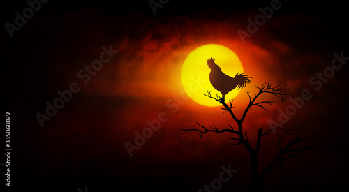 Fotografia Rooster crowing on the tree at dawn