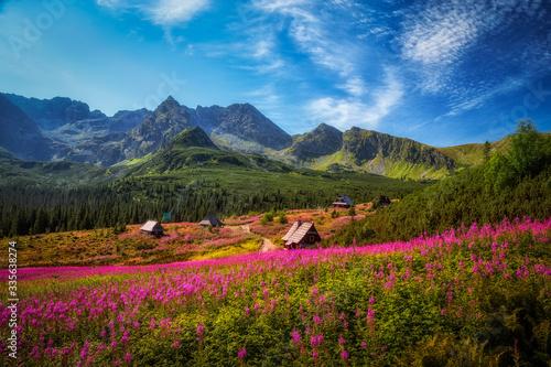 Hala Gąsienicowa w Tatrach usłana kwiatami wierzbówki kiprzycy