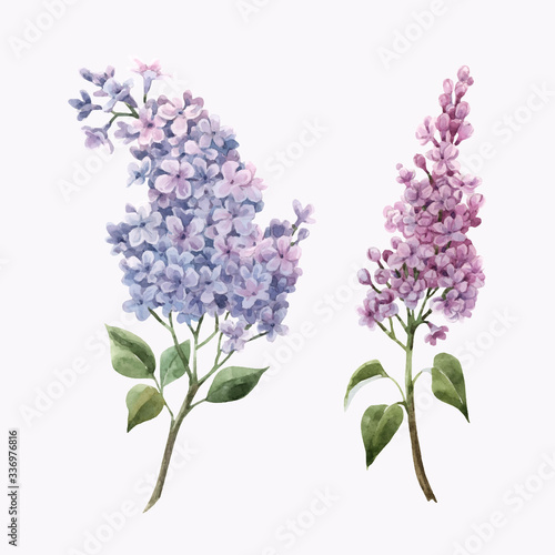 Valokuvatapetti Beautiful vector watercolor floral set with pink lilac flowers