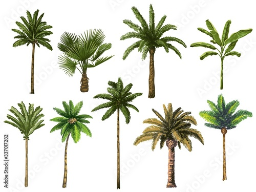 Obraz na płótnie Colourful hand drawn palm tree