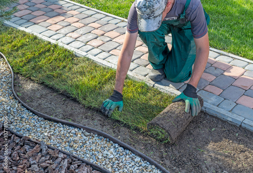 Canvas-taulu Landscape Gardener Laying Turf For New Lawn