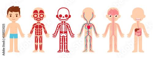 Fotografia Anatomy child cartoon illustration