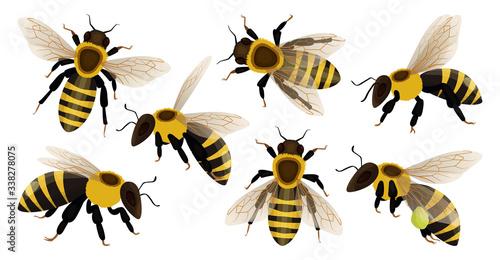 Slika na platnu Honey bee isolated cartoon set icon