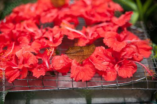 Fotografie, Obraz Butterfly On Flower