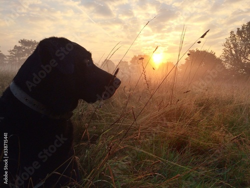 Photo Dog Sitting On Grassy Field Against Sky