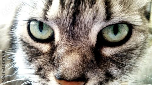 Fotografia Close-up Portrait Of Cat