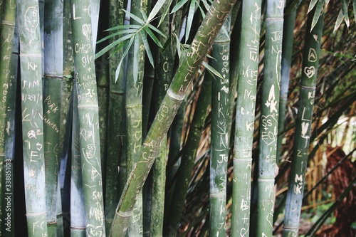 Photographie Close-up Of Bamboos