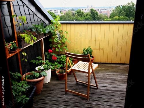 Vászonkép Flower Pots At Balcony Of House