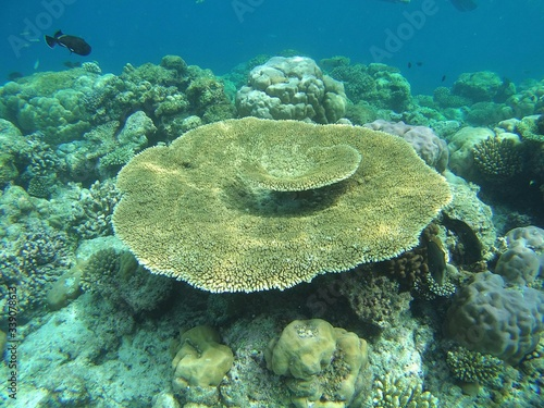 Fotografia High Angle View Of Coral Growing In Sea