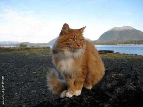 Cat Sitting On Rock At Lakeshore Fototapeta