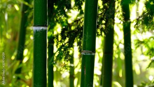 Fotografía Close-up Of Bamboos