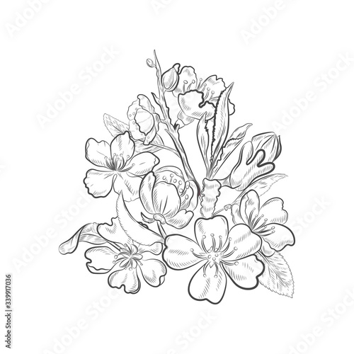Foto Floral blossom of almond tree isolated on white background