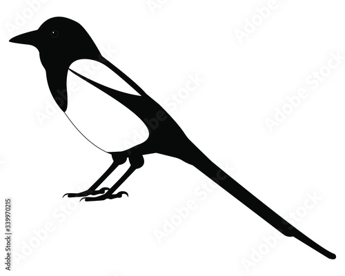 Wallpaper Mural magpie bird vector isolated on white background