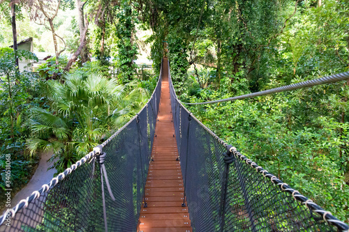 Tablou Canvas Footbridge Amidst Trees In Forest